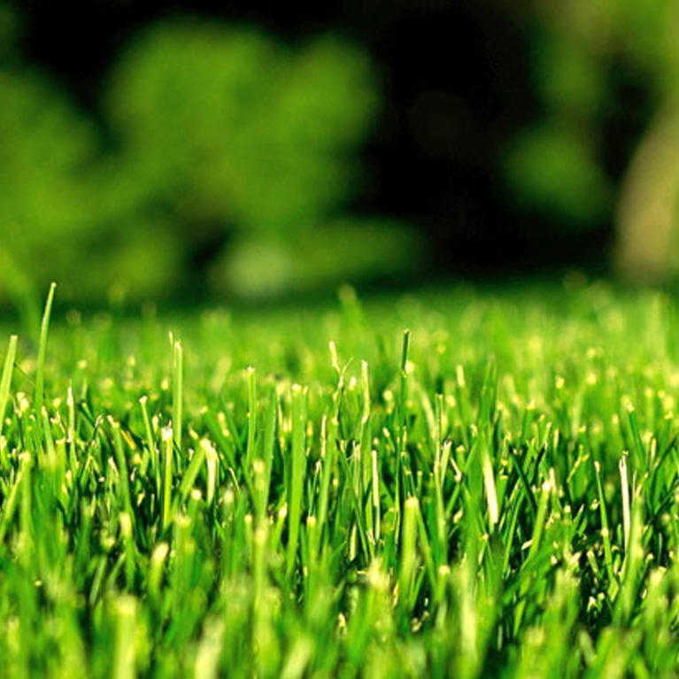 close up of Green Lawn