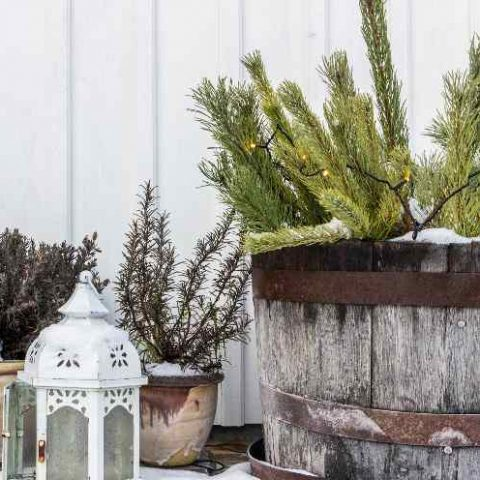 How to Make the Most of Your Garden in Autumn and Winter
