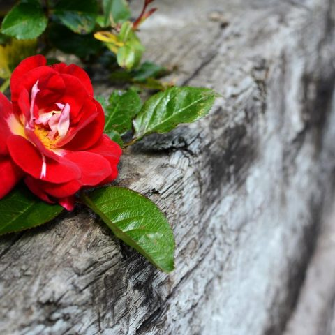 5 Landscaping Ideas for Small Gardens